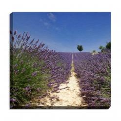 Leinwandprint Lavendel
