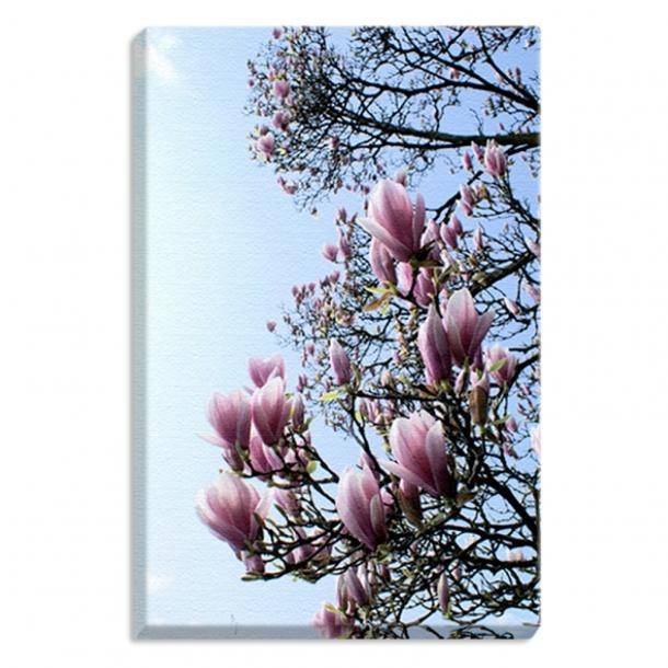 Leinwandprint Magnolia