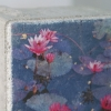 Lily pond s